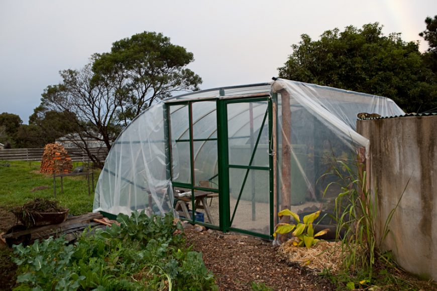 Issue Two, Greenhouses and Pigs