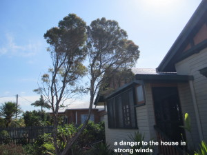 a danger to the house in strong winds