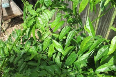 February Gardening Guide – Tropical Climate