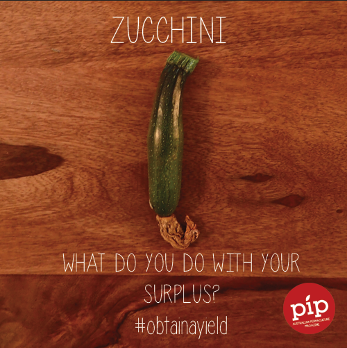 What do you do with your surplus zucchinis? #obtainayield