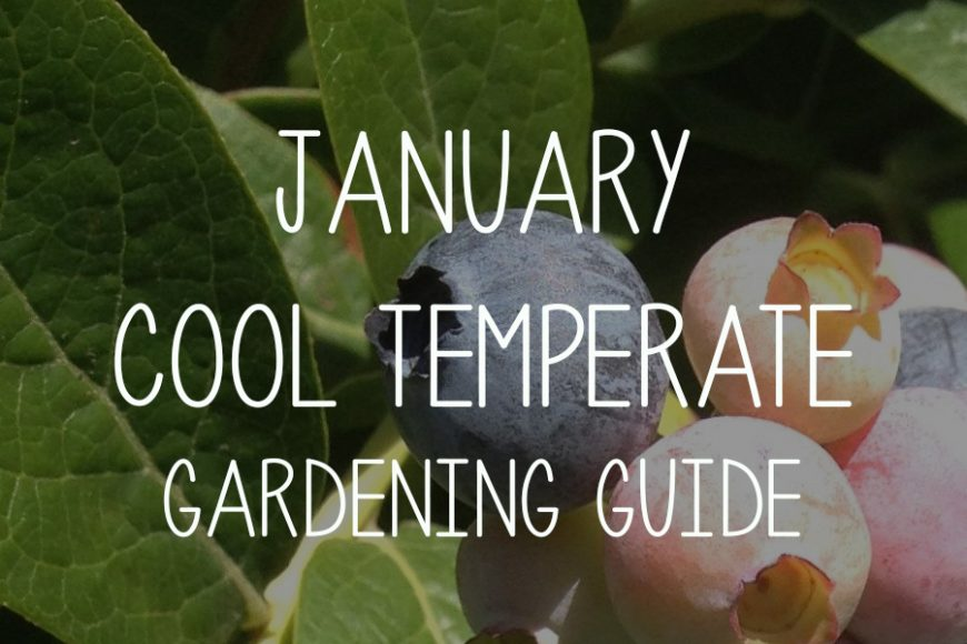 January Cool Temerpate Gardening Guide