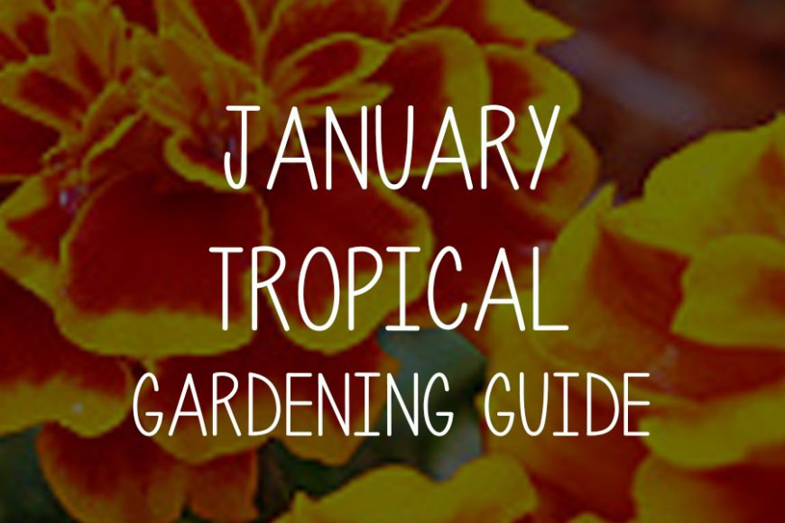 January Tropical Gardening Guide