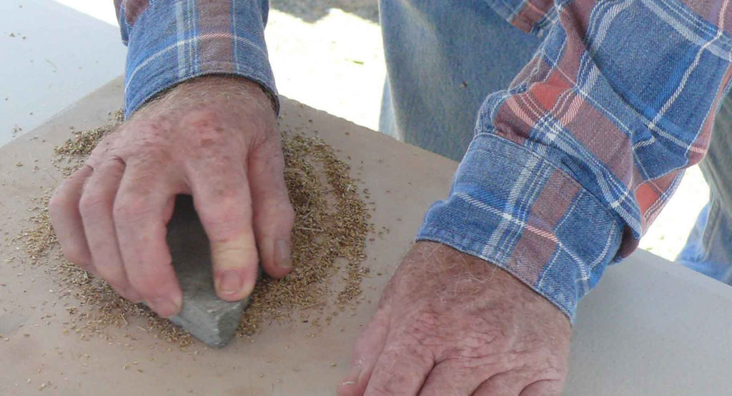 Grinding native millet to make bread by Bruce Pascoe