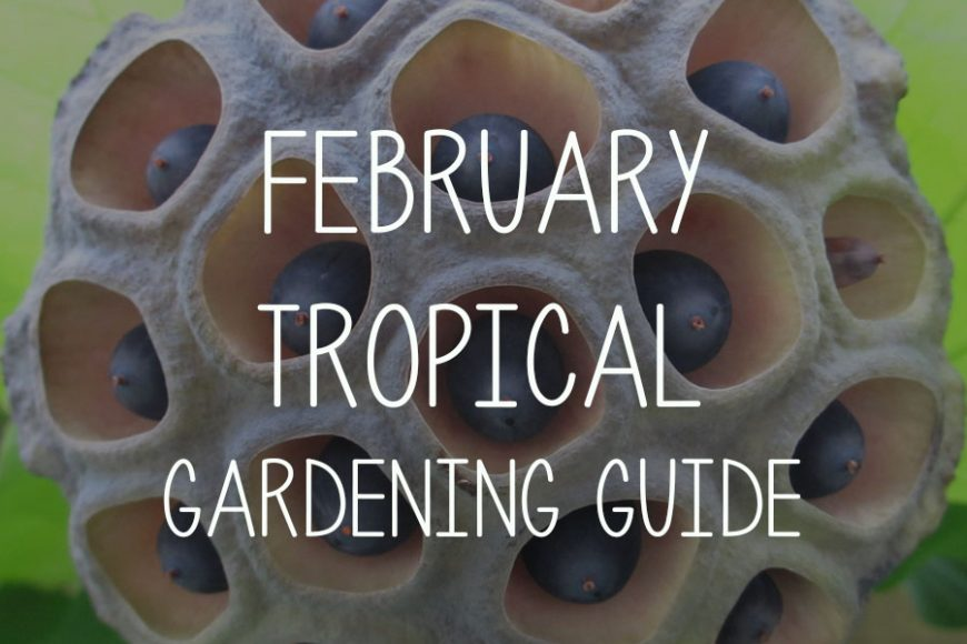 February Tropical Gardening Guide