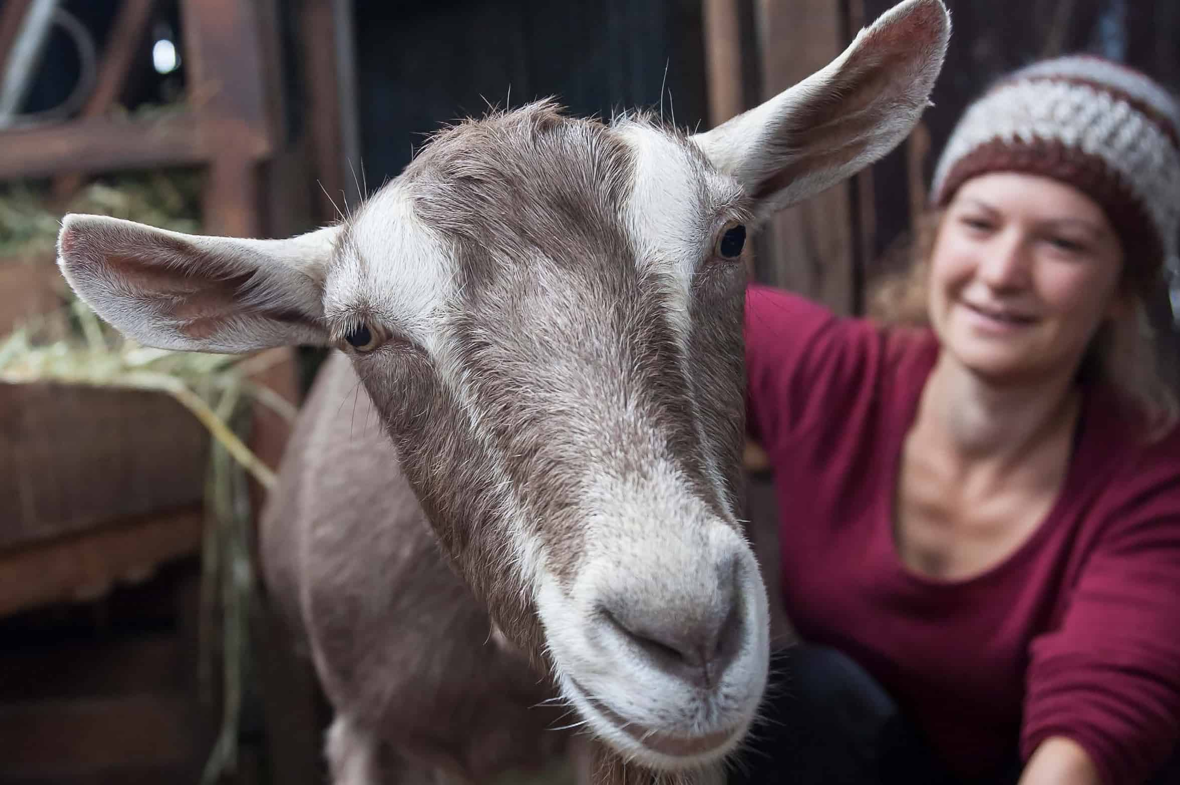 Pip Permaculture Podcast #4: Backyard Goats with Maria Cameron