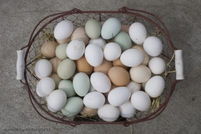 Coloured Chicken Eggs: Chook breeds who lay outside the spectrum