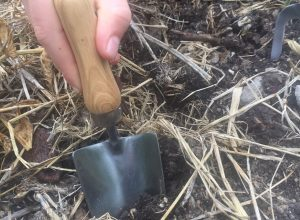 Image of hand trowel in the garden