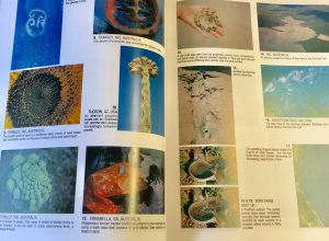 Image of page spread from inside PERMACULTURE: A Designer's Manual by Bill Mollison