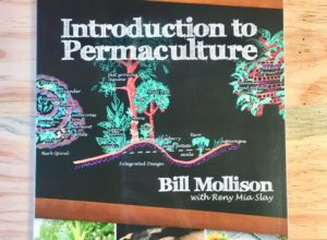 Image of the cover of Introduction to Permaculture By Bill Mollison with Reny Mia Slay