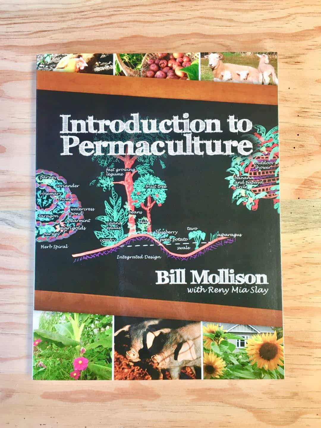 introduction to permaculture Discover a system that designs productive ecosystems and consumes its own  waste permaculture uses nature's design to grow food, fuel, fiber and medicine  for.