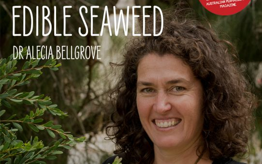Pip Permaculture Podcast Edible Seaweed with Dr Alecia Bellgrove