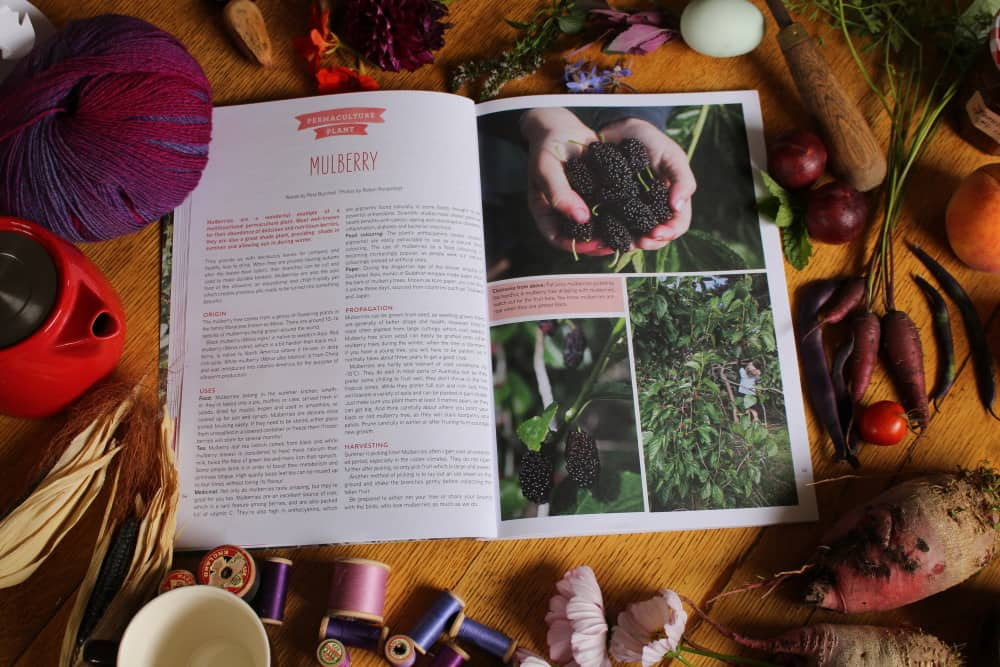 pip issue 10