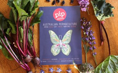 Pip Magazine Issue 12 is here!