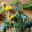 Spring Weed Foraging Guide