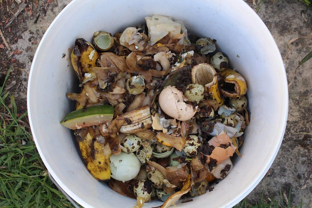 bokashi bucket with food scraps