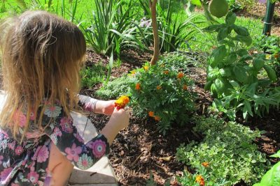 Creating a Sensory and Edible Garden for Kids