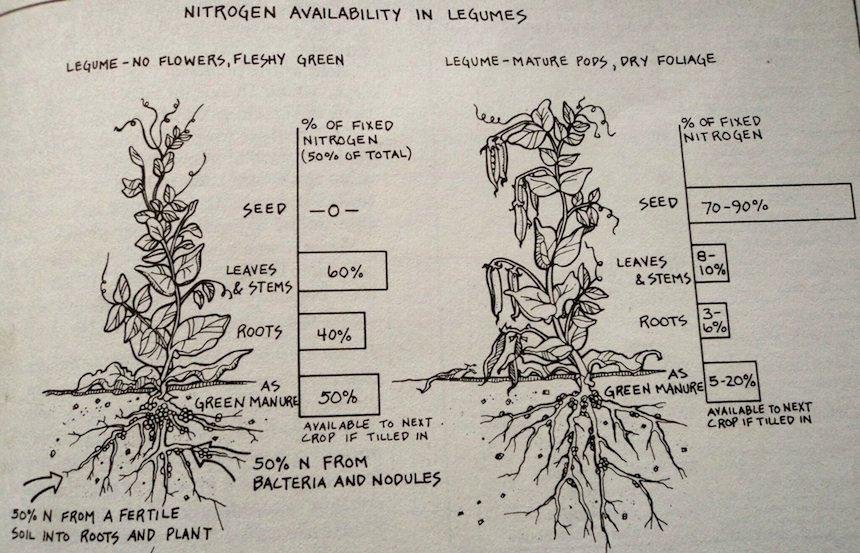 Designing + Maintaining Your Edible Landscape Naturally, by Robert Kourik