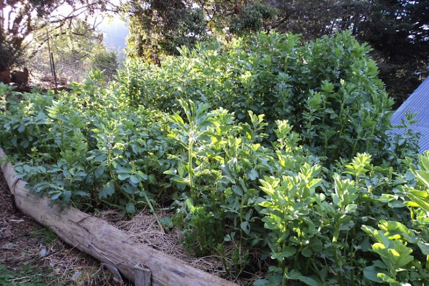 Green Manure: The Secret to Improving Soil Health