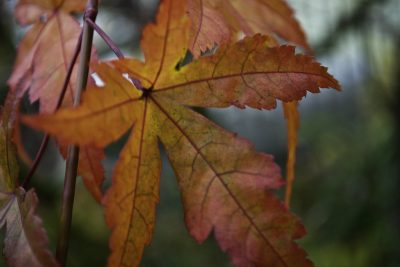 5 Things to do With Autumn Leaves