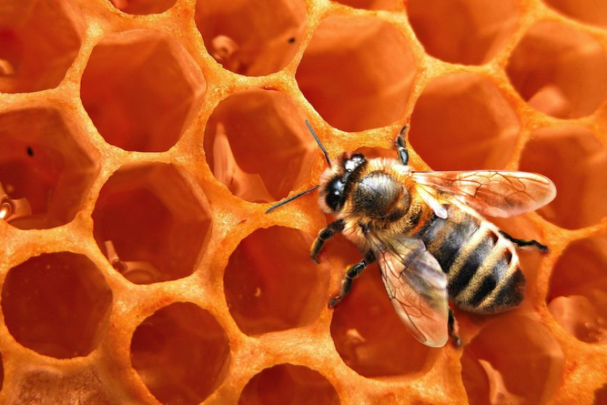 6 Types of Beehives: The Pros and Cons