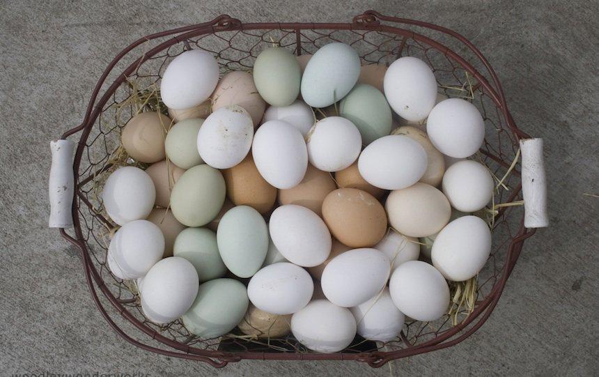 bartering eggs