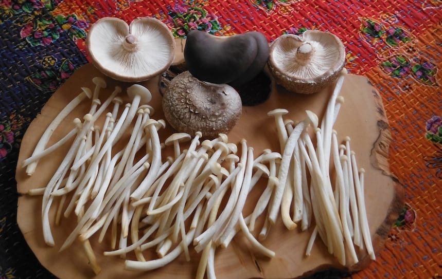 Fungi in Permaculture