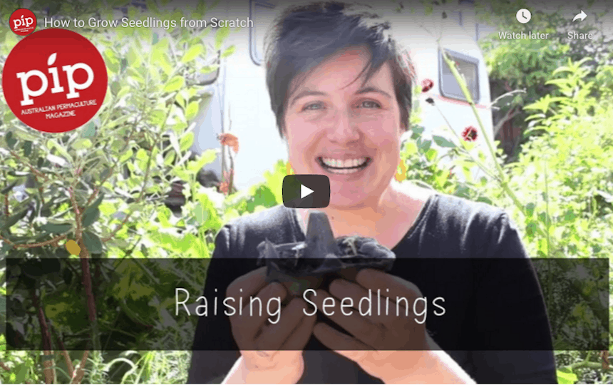 Simple Skills for Self-Sufficiency Raising seeds