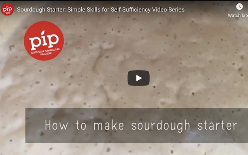 Simple Skills for Self-Sufficiency Sourdough Starter