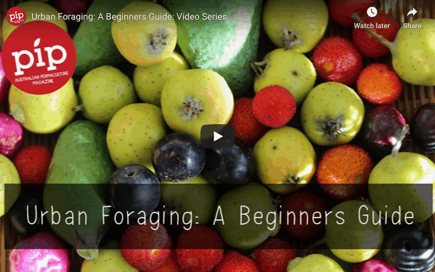 Simple Skills for Self-Sufficiency urban foraging